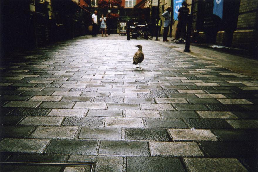 moradores de rua fotografam 8