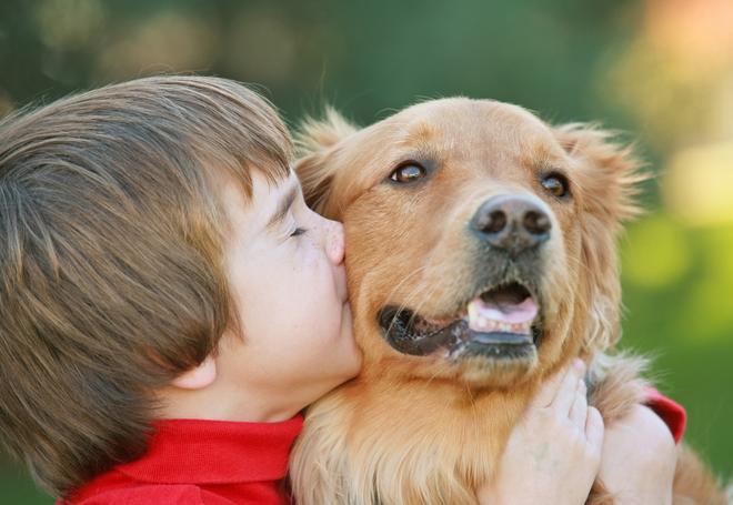crowdfunding-para-projetos-sociais-para-animais