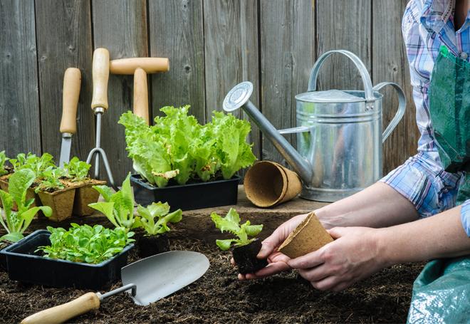 cultivar-seus-alimentos
