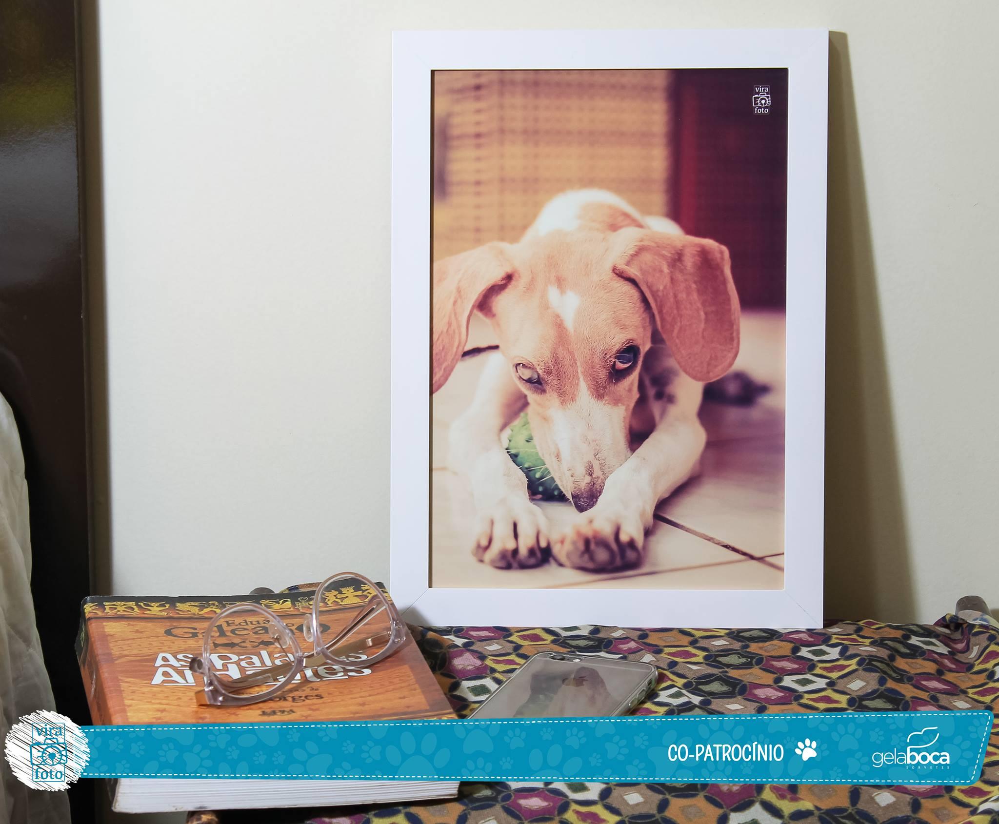 projeto-vira-foto-ajuda-animais-abandonados-2