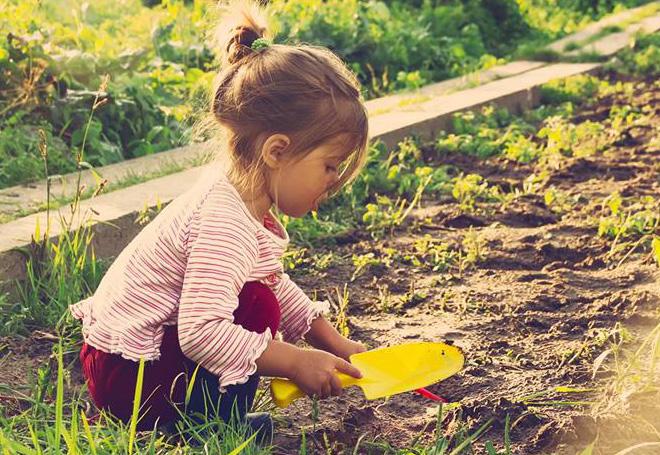 horganico-hortas-organicas-urbanas