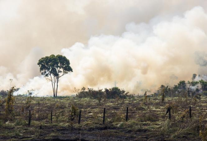 Ajudar a Amazônia