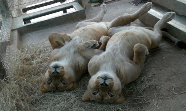Santuário Animal