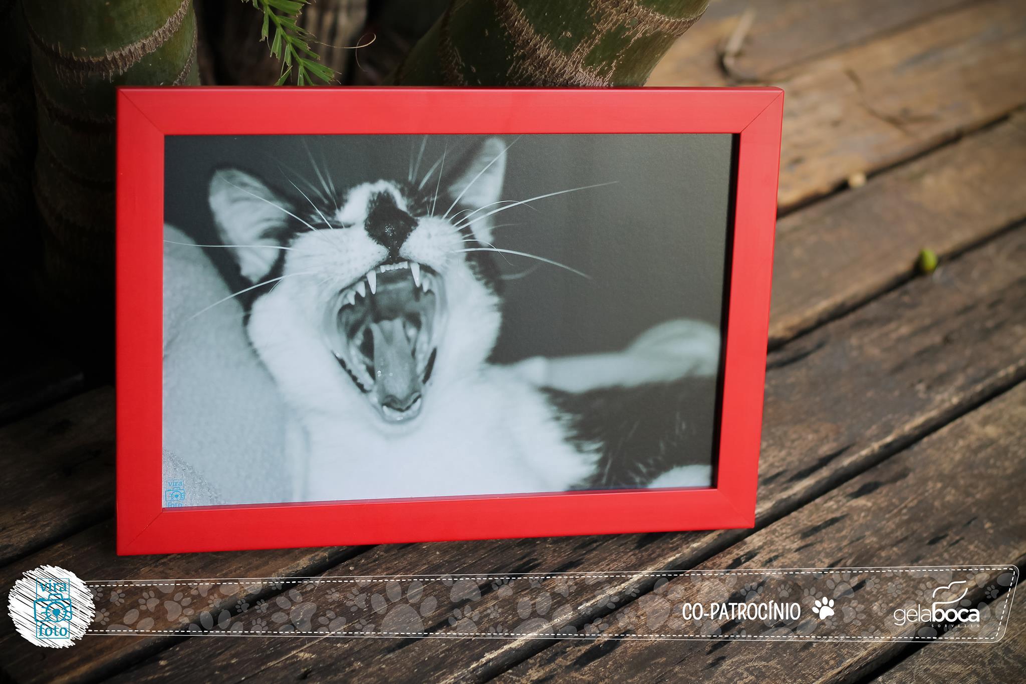 projeto-vira-foto-ajuda-animais-abandonados