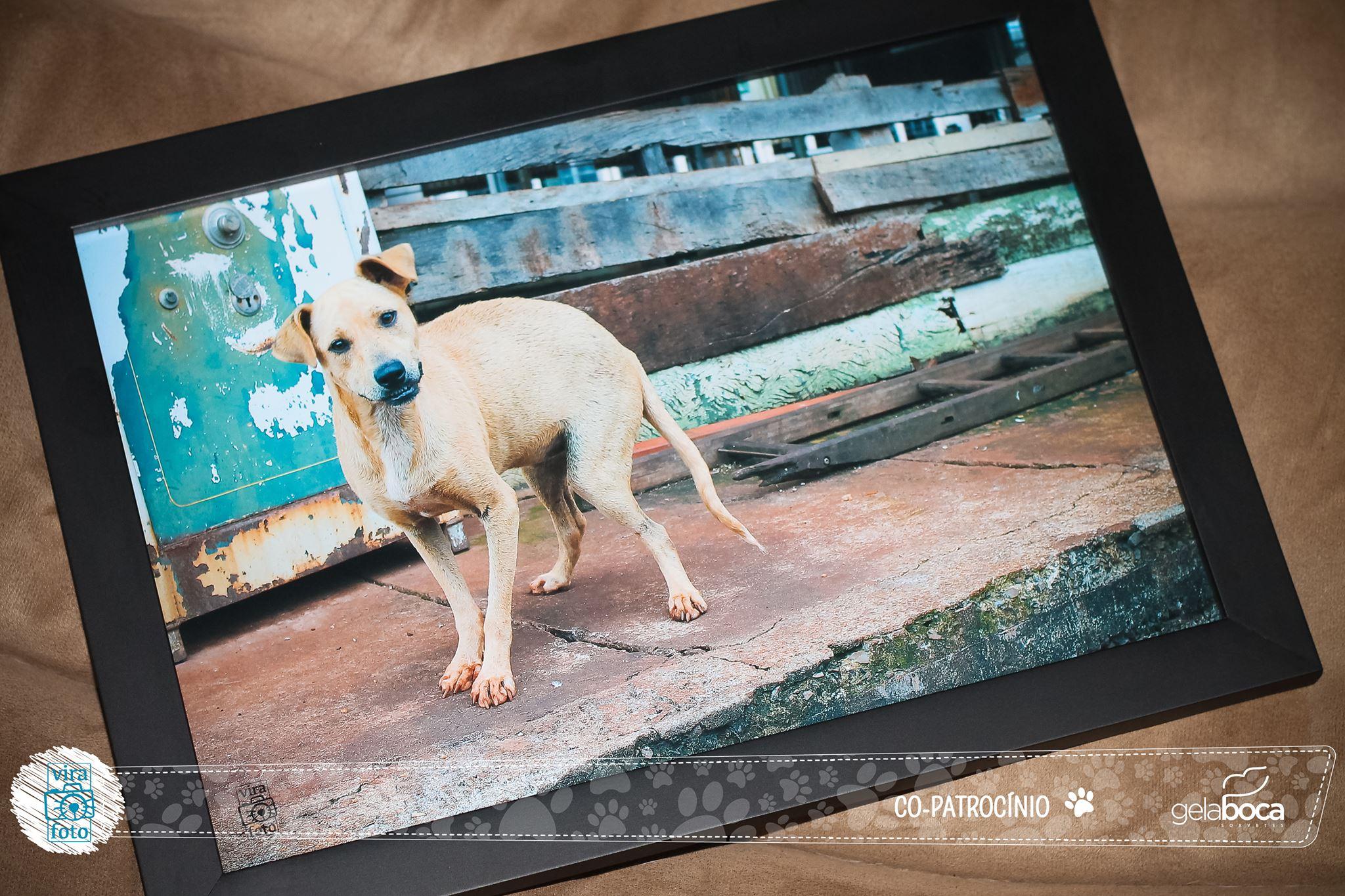 projeto-vira-foto-ajuda-animais-abandonados-4