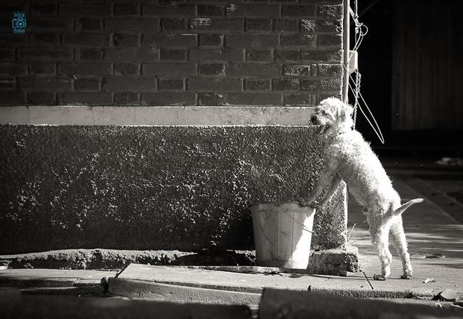 projeto-vira-foto-ajuda-animais-abandonados-cover