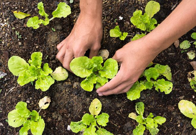 agricultura-organica-produtores